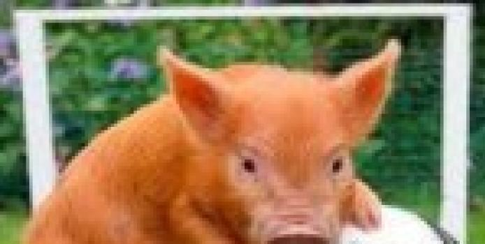 Califarm-Jibofarm a castigat Cupa Porcului editia a 3 a